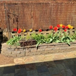 Colorful tulips border the secluded patio and small backyard
